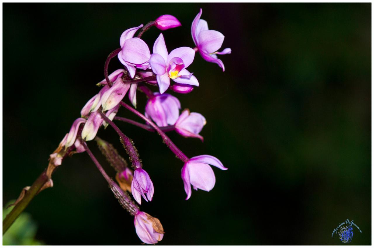 floralie-2