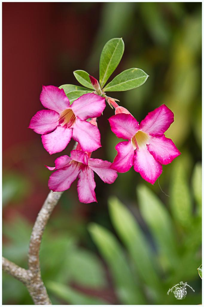 floralie-6