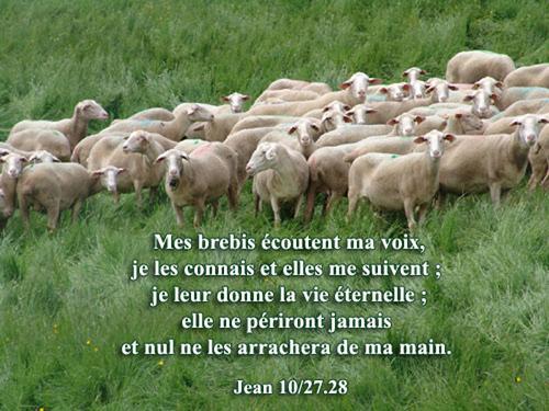 jean-10-27 mes brebis écoutent ma voix