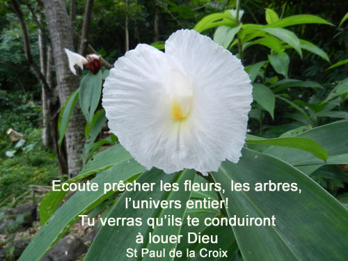 St-Paul-de-la-Croix-écoute prêcher les fleurs