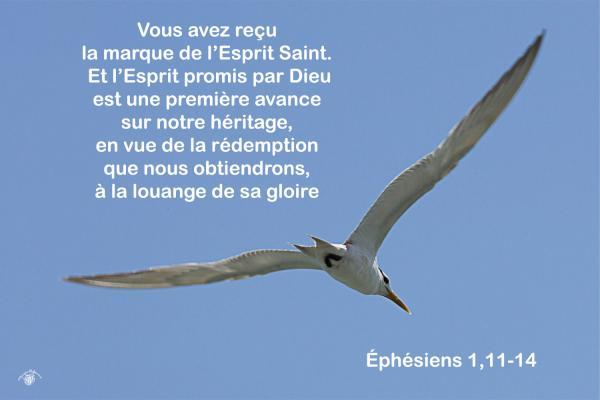 Ephesiens 1 11 14aw