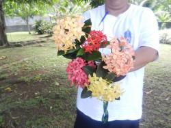 fleurs-1w.jpg