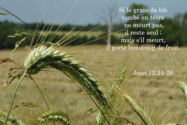 Jean 12 24 26aw