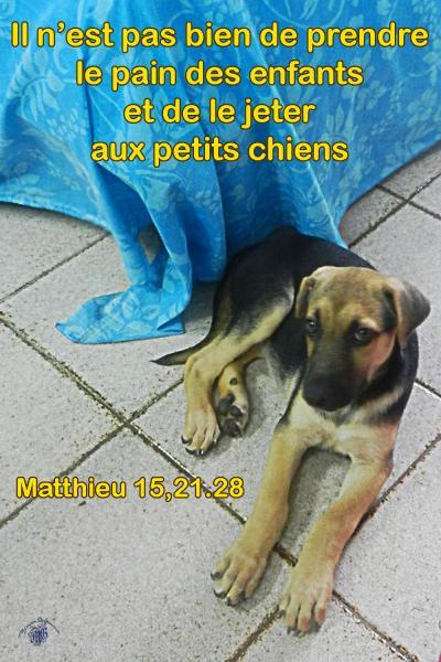 Matthieu 15 21 28aw
