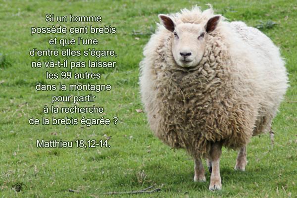 Matthieu 18 12 14aw
