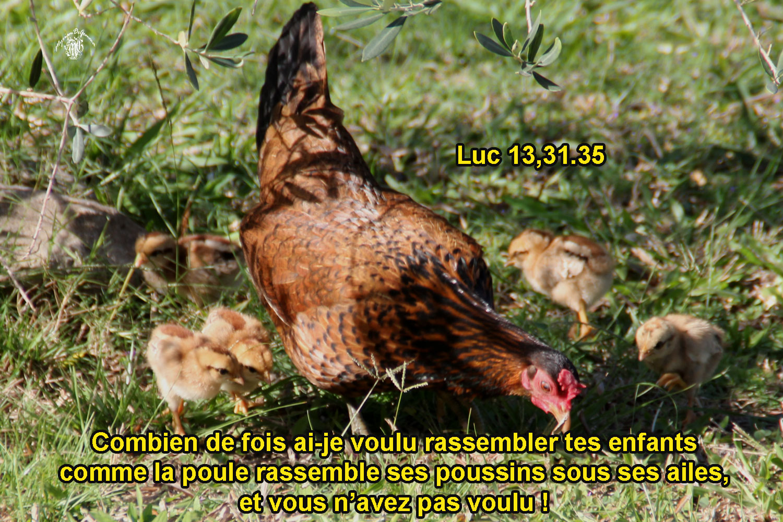 Commentaire de Luc 13, 31-35